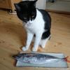 今日の黒猫モモ&白黒猫ナナの動画ー784