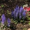 カラーリーフの花