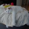 【58本目】猫様の介護を覚悟した
