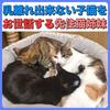 子猫のお世話をする先住猫姉妹!まだまだお乳を吸いたい生後6ヶ月の子猫!