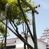 【写真で観光】藤棚を撮影に鶴ヶ城へ。道中市内の藤棚巡りもしてみた。