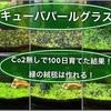キューバパールグラスCo2無しで100日育てた結果!緑の絨毯は作れる!