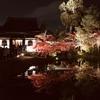 豊臣秀吉公ゆかりの寺「高台寺」のライトアップされた艶やかな紅葉