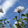 久々の青空 花を撮りにウォーキング