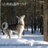 古典的条件付け (classical conditioning )②