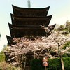 瑠璃光寺五重塔と桜。。。