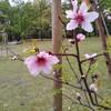 花博記念公園アーモンドの森と小ネタ集