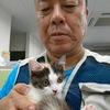 七転八倒紆余曲折医師54才で初めて子猫を飼う【スコティッシュフォールド♀3カ月キャリコ】名前は没っちゃん=三毛猫ホームズ(室内猫)です。