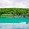 【2019年6月売店オープンで話題!美瑛・白金青い池】なぜ青い?夏休みに行きたい北海道のパワースポット!