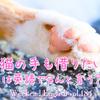 【週末英語#184】英語で「猫の手も借りたい」とは?