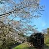 桜と『はやとの風』