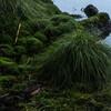 Moisty grass