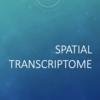 空間的なトランスクリプトーム