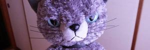 【60代の日常】おこりんぼの猫。スクラッチ・キャットをお迎えしました。