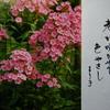 3月9日誕生日の花と花言葉