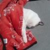 一年前にノミの治療をした飼い猫にまたノミがついていたお話