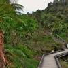 「ワイマング火山渓谷(Waimangu volcanic valley)」~「インフェルノクレーター」に向かったはずだったのだが。。。