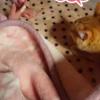 寝室の布団で包まるも、姪っ子&妹に邪魔されるココちゃんwww
