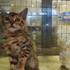危ない! 猫がもう1匹増える所だった! ペットショップ否定派の意味がわかんない