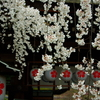 ドクた、の桜・デジカメ徘徊 (4を飛ばして) 5