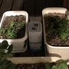 プランターや植木鉢のコバエが劇的に少なくなった超簡単な方法