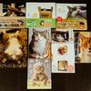 猫好きの妻が買い漁っているかわいい猫ちゃんの本・ブログ・Instagramを紹介
