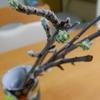 湯呑の枝。
