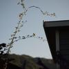 風の庭、木曜日