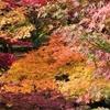永観堂の紅葉を観に行く(その2)②観光101…20201116京都