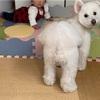☆仲良しな娘と犬☆