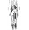 不良姿勢による身体への影響