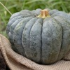 【かぼちゃ徹底解析!】栄養価、美容効果、選び方、保存法は??