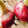 紫玉ねぎの凄い効能にビックリ!「紫色」の食物は目の老化予防!血管強化!【ゆる糖質食】