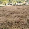 除草作業のスポット契約案件、その後