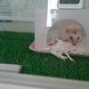 ハリネズミがお家にやってきた!