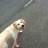 ウィッグを贈る、犬の散歩/ボランティア