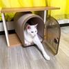 【うーちゃんを助けたいにゃ】 にゃんねこ25匹の猫生活を紹介するにゃ 6