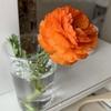 ビタミンカラーの花を育て、パワーを充電、元気をもらう。