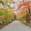 下鴨神社と糺の森の紅葉2018、見ごろや現在の状況。