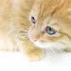 かわいいネコの画像と動画