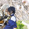 『刀剣乱舞』小狐丸と三日月宗近の桜撮影をまとめてみた