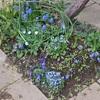 青花のコーナー