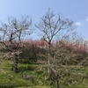 「マダム倶楽部」活動報告 しだれ桜を眺めた後に向かった公園では、池の水抜いてる!? 3月27日