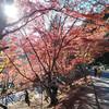 愛知県にある紅葉の名所、「香嵐渓」にいってきた