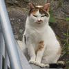 猫の集会 「みんな大丈夫か?」