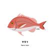 日本では「百魚の王」マダイさん
