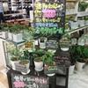 1000種以上の虫を寄せ付けない奇跡の天然農薬【ミラクルニーム】!今年の入荷がスタートしました!!