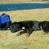 職場放棄してきたモンゴルの犬の話。