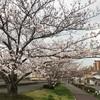 江戸川菜の花ライド(暗転以後)