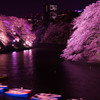 夜桜  - 千鳥ケ淵 -